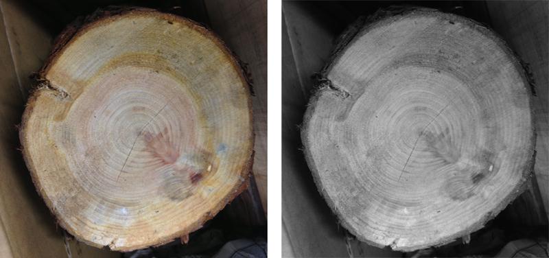 treering_photo