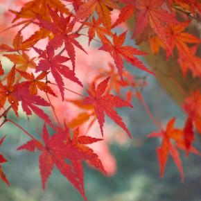 秋のアトリエ