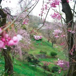 春のアトリエ