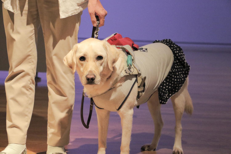 盲導犬のリルハさんの写真