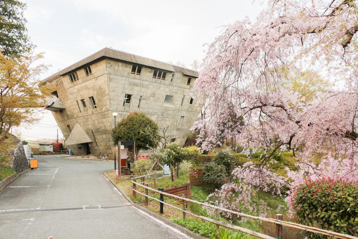 しだれ桜と大学セミナーハウス本館