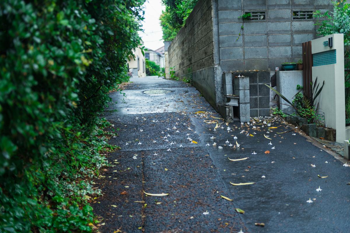 雨に濡れた花が散っている坂道