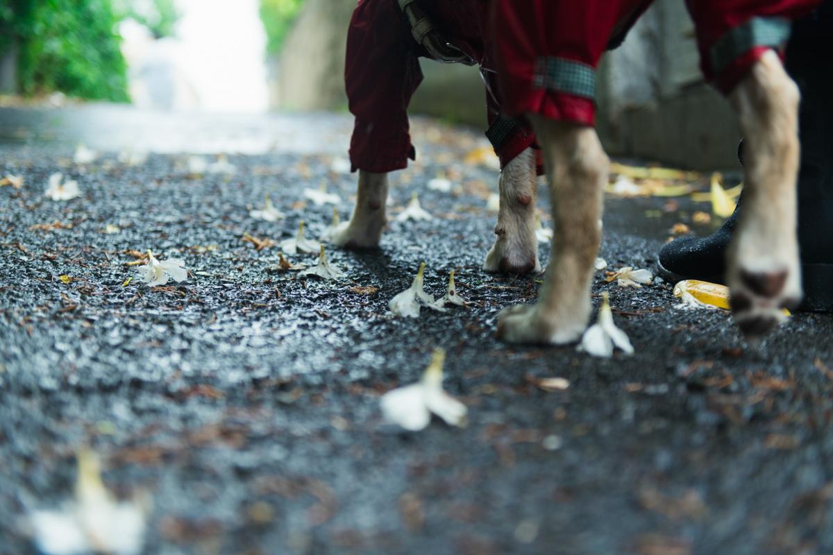 その坂を登るリルハちゃんの足