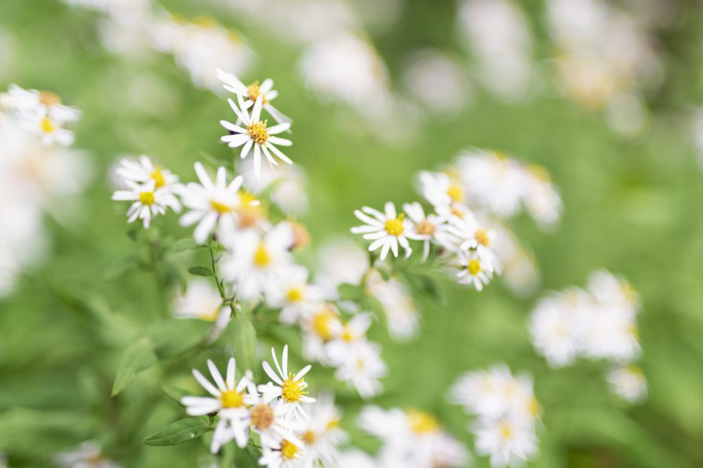 植え込みの側に咲いた花