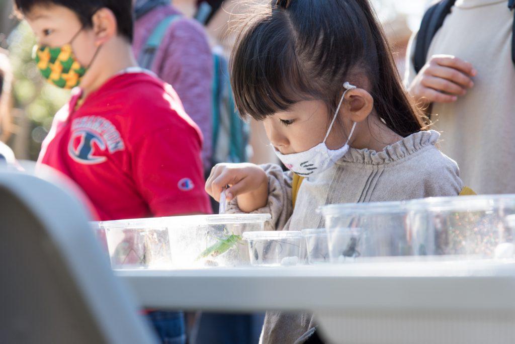 虫を観察する子どもたち